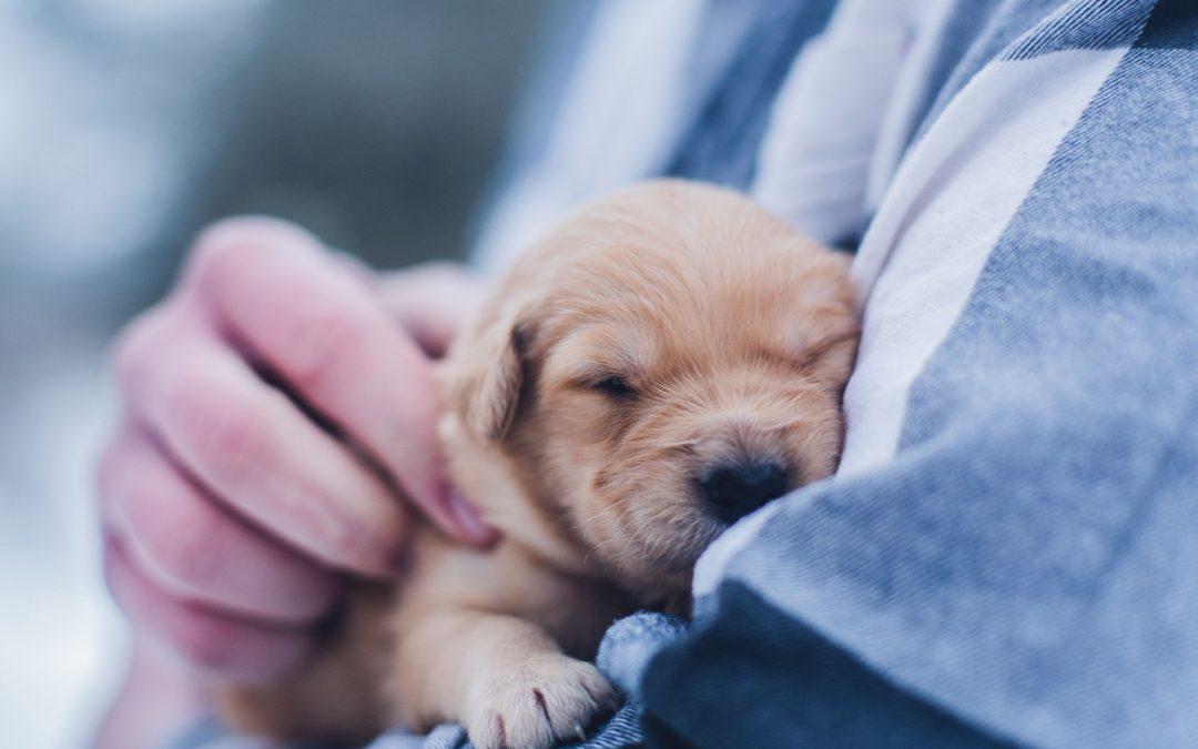 CBD ja kannabis lemmikkien hoidossa