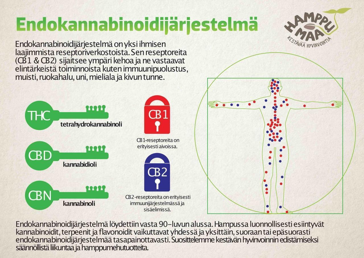 endokannabinoidijärjestelmä_sisäinen_kannabinoidijärjestelmä_infograafi